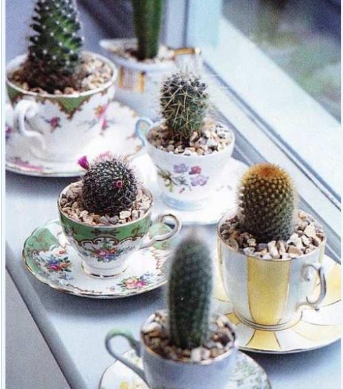 17 Best images about teacup planter ideas on Pinterest ...