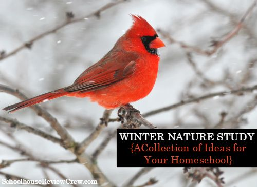 Winter Nature Study Resource List {with FREE Nature Journal} - Ben ...