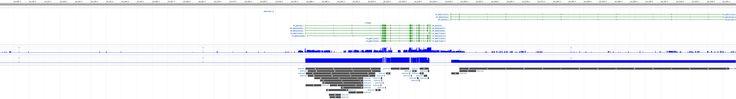 CTNNB1 catenin (cadherin-associated protein), beta 1, 88kDa [Homo sapiens (human)] - Gene - NCBI