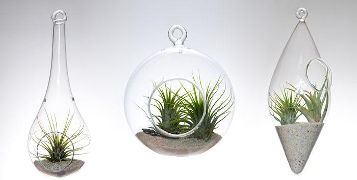 Terarii Aerium designist 04 Terarii Aerium: grădini în miniatură, cu plante aeriene. Un proiect de Ramona Bejan.