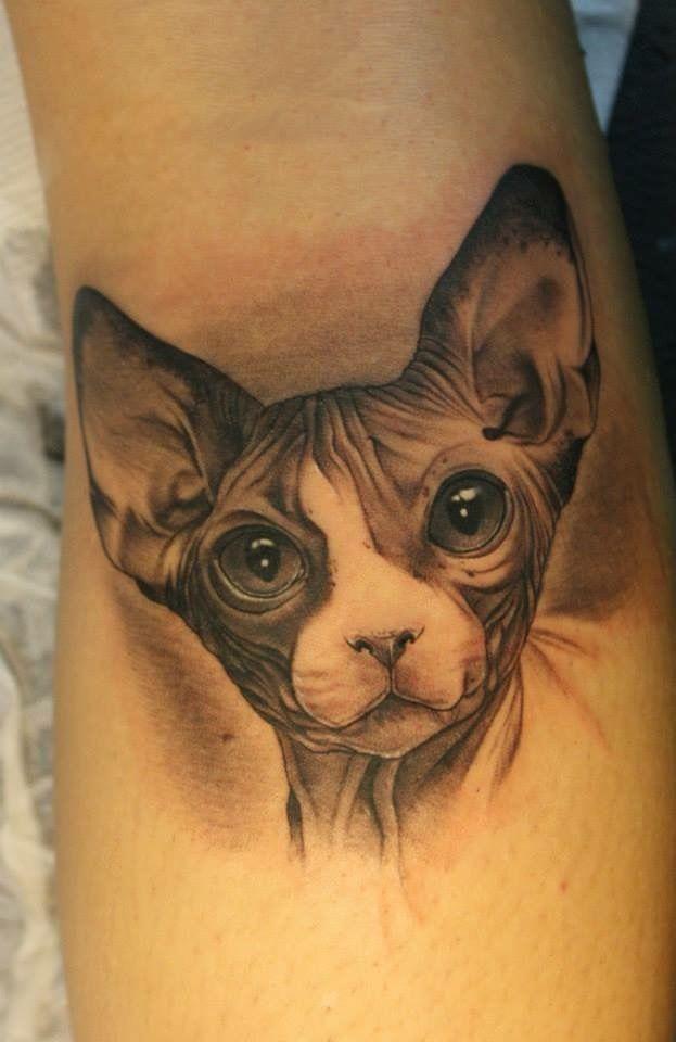 26 besten sphynx tattoos bilder auf pinterest katzen for Hairless cats with tattoos