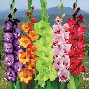 26 best bulbs images on pinterest flowers garden vegetable garden perennial bulbs mightylinksfo