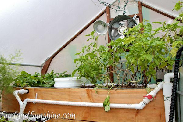 The ecoqube diy aquaponic gardening with fish gardens for Fish aquaponics garden