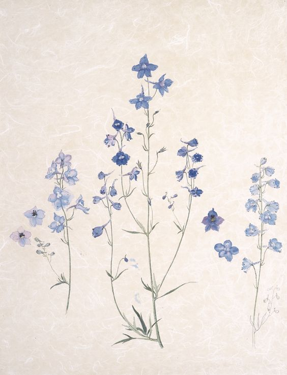 little augury:  Deborah, Duchess of Devonshire  DELPHINIUMS by Emma Tennant