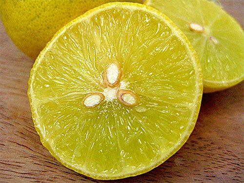 citron tee prostata