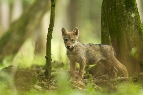 wie wil nou zo een lief vosje afmaken? stop de jagers en de subsidie van uw BELASTING geld voor het Oranjehuis en alle andere dierenbeulen