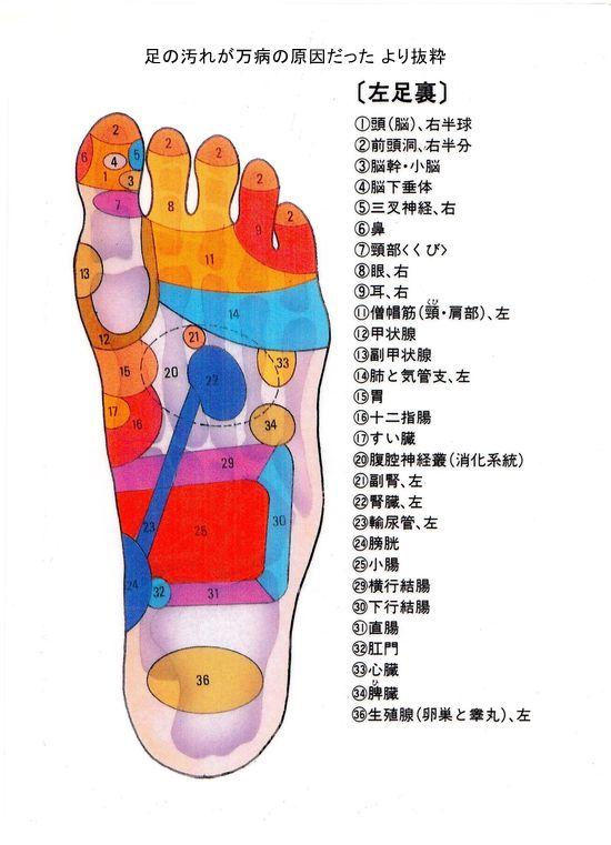 足つぼの図解~大きな図で効果的に反射区の場所を確認 | Wellness Report