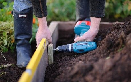 A beginner's guide to starting a veg garden - Telegraph