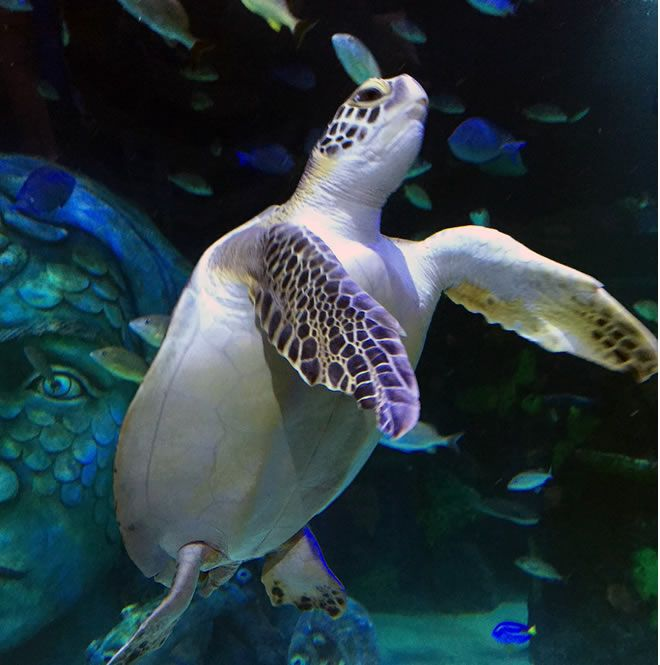 Benson SEA LIFE Michigan Aquarium FunInTheD Fun In Detroit Micihigan