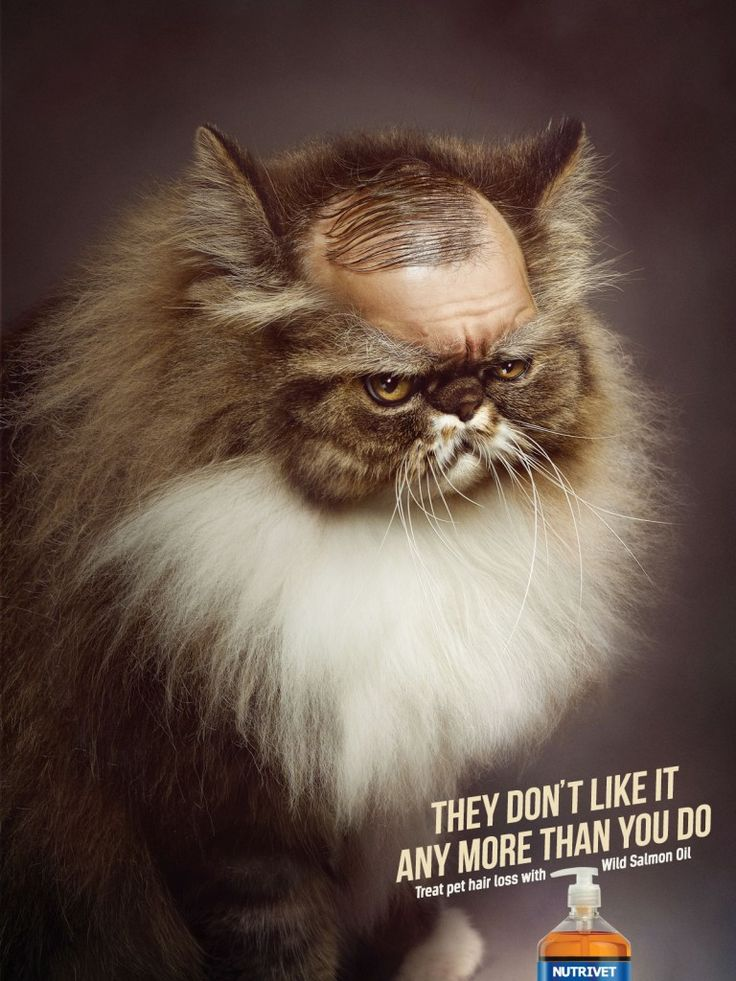 """Nutrivet: Cat - """"They don't like it any more than you do. Treat pet hair loss with Wild Salmon Oil."""" #Advertising #Cat"""