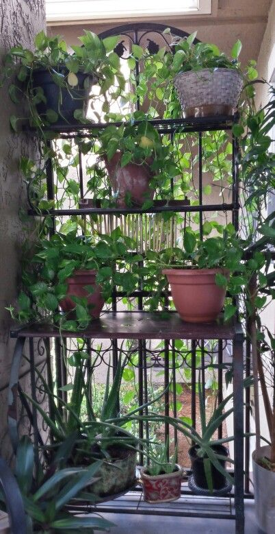 Small Patio Garden Ideau0027s. Up Cycled Old Bakers Rack After Stain U0026 Seal.  Also