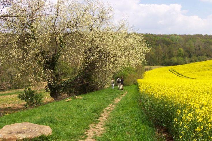 Le parc naturel régional du vexin français near La Roche Guyon.