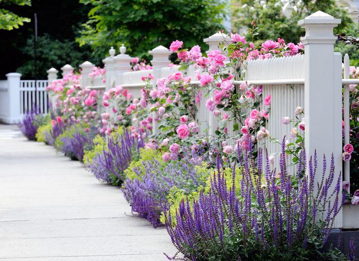 лето, цветы, розовые, желтые, ограда, Сад, белый, розы, красиво, цветник, забор, синие, весна