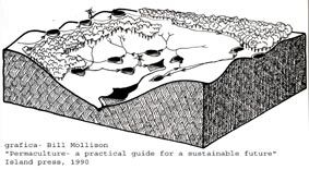 """Los principios """"clasicos"""" de la Permacultura"""