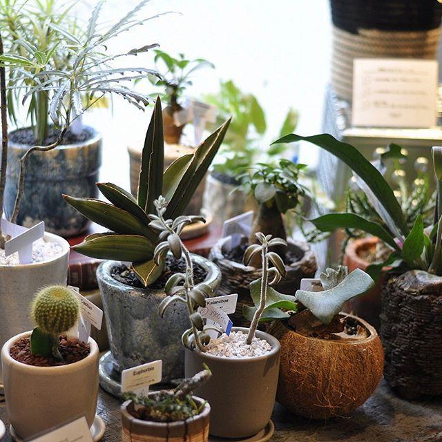 Vintage Einrichtungen, Studio Wohnungen, Green Cactus, Immobilien