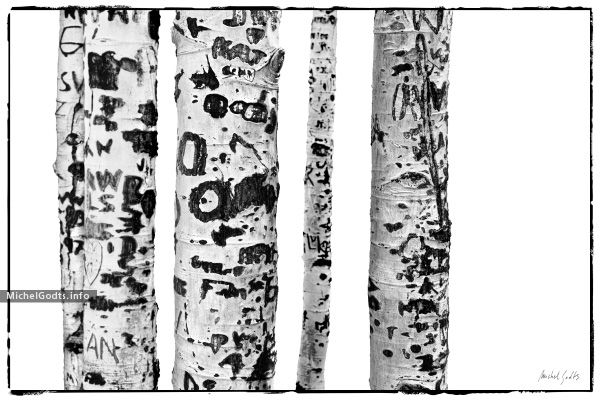 Black and white abstract photography print for sale—Marks and other graffiti etched by hikers on aspen trunks. Wall art black and white photograph for art collectors or for a contemporary or rustic wall decor.