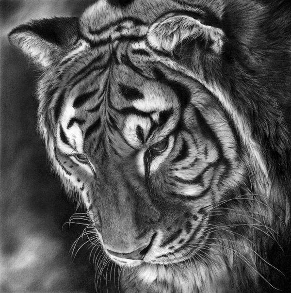 jurek zamoyski art | Oltre 1000 idee su Disegno Di Tatuaggio Della Tigre su Pinterest ...