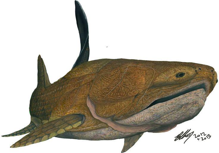 Reconstitution du placoderme Entelognathus primordialis, dont la mâchoire est composée des mêmes os que ceux rencontrés chez les poissons osseux... qui sont apparus après lui. © Brian Choo