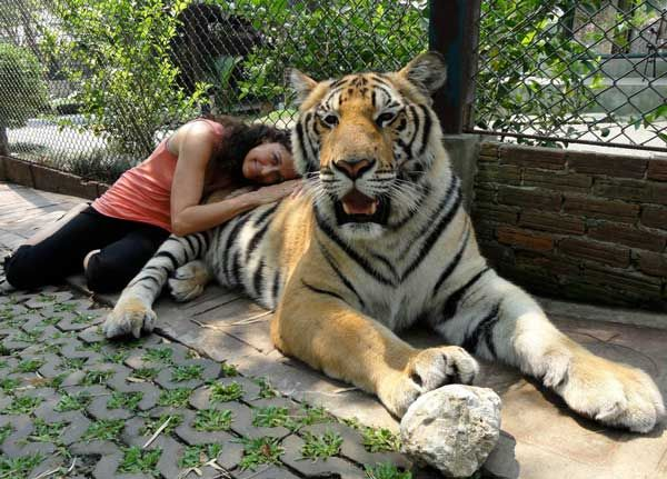 These 22 Amazing Facts About Tigers Blew My Mind…But The Last 5 Brought Me To Tears