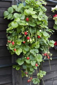 Could do this in a number of vertical garden ideas
