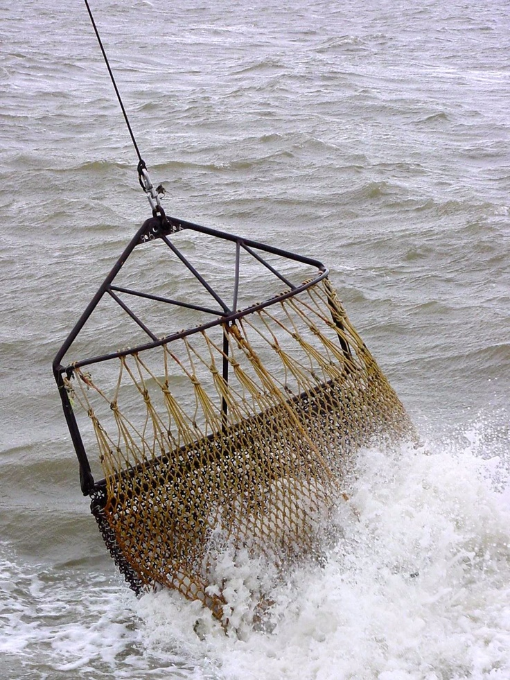 Nederlandse Mosselen | Marine Stewardship Council | Visserij op mosselen in het Zeeuwse Delta | www.msc.org/nl |