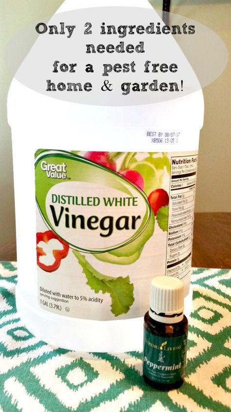 Combine 1 drop of Peppermint oil (I only trust these oils for my family!) to every ounce of vinegar. Shake before each use! Note: Do not use apple cider vinegar, only white vinegar. ACV has a fruity smell that fruit flies love and you may cause more harm if you use it!