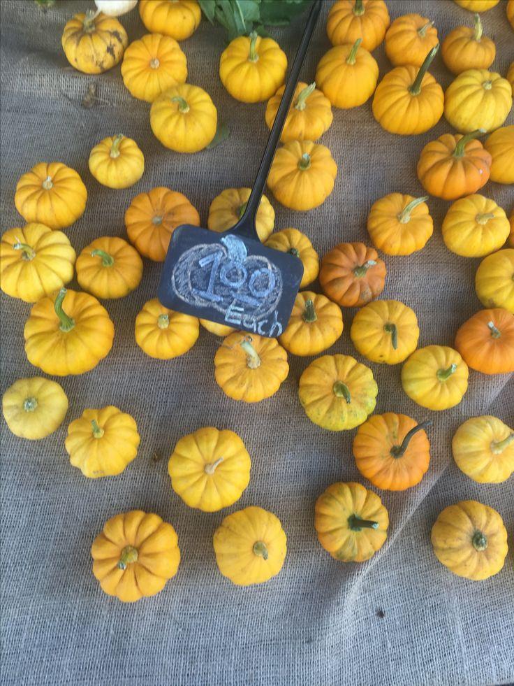 Little Italy Farmer market #fall   @yourlife.mylens