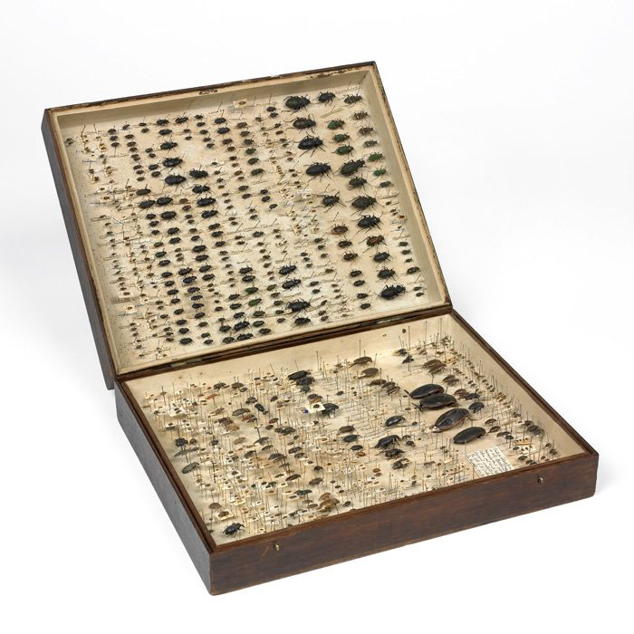 Charles Darwin's beetle collection.