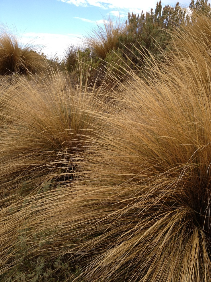 Native Grasses Coorong South Australia Country Roads
