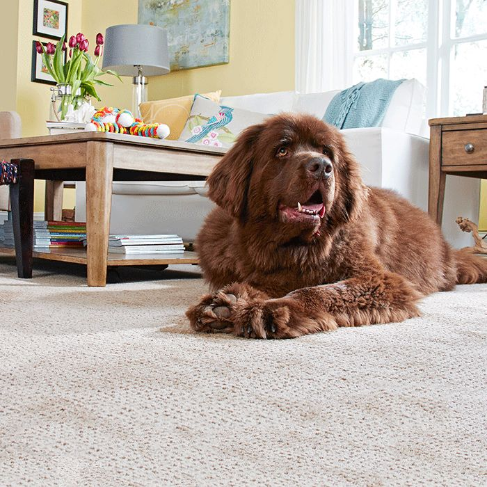 Dog Looks Like A Rug: 141 Best Prepare To Be Floored Images On Pinterest