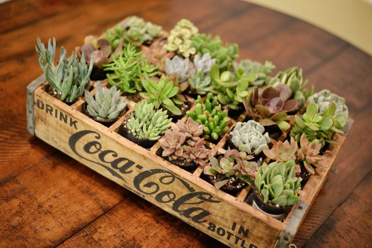 Vintage Coke Crate with Colorful Succulents.