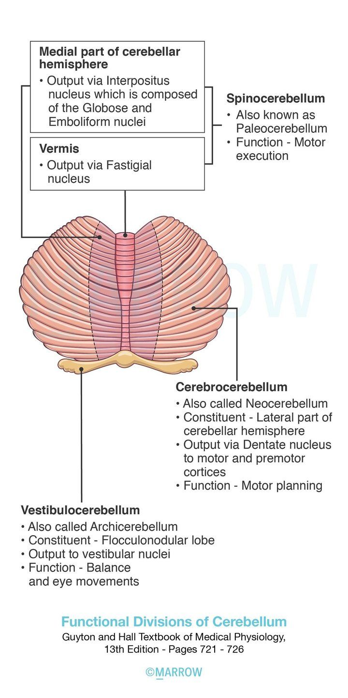 Functional Divisions of Cerebellum Premotor cortex