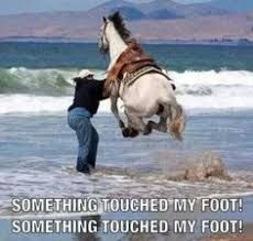 Image result for horse jokes