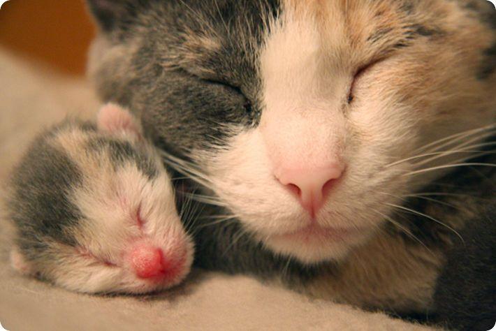 chatte et chaton nouveau ne ecaille de tortue