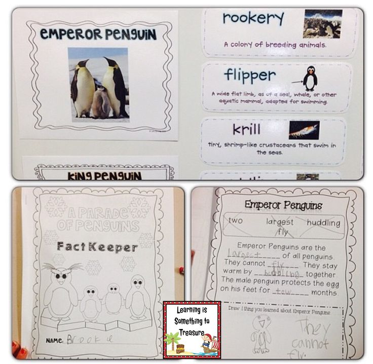 This non-fiction penguin unit is sure to grab and keep your students' attention! This unit is jam-packed with information on 10 different species of penguins, including: Emperor, King, Chinstrap, Crested, Little, Rockhopper, Adelie, Macaroni, Gentoo, and African Penguins