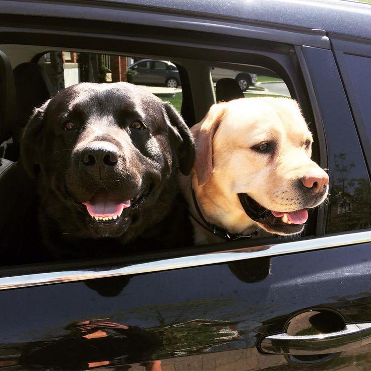 Carey Price's dogs