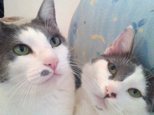 Jerry and tomy, my cats!