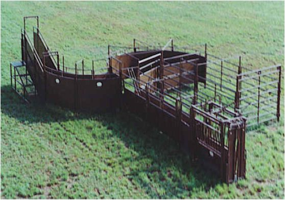 Working Pens And Loading Chute Working Ranch Cattle