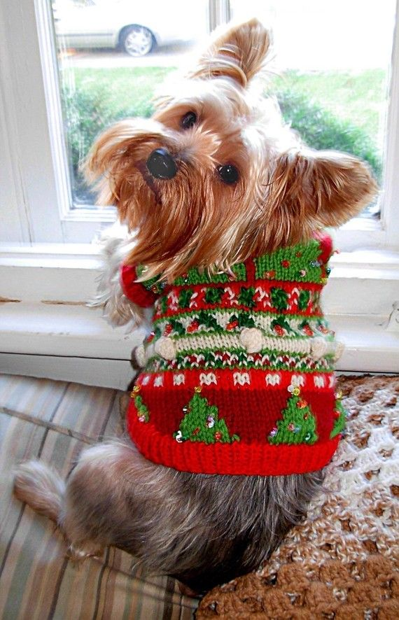 This one is completely over-the-top! Beads, bobbles and fair isle Christmas trees and holly make the wearer of this sweater one haut dog.  This fair isle knitting pattern, suitable for the experienced knitter and extreme little-dog-lover, uses five shades of worsted-weight yarn, size US 6 and 7 straight or circular needles plus size 6 circular needles and DPNs, and has a finished chest measurement of approximately 10-12, 13-14, or 17-18. (The sweater in these photos is shown on a dog with 16…