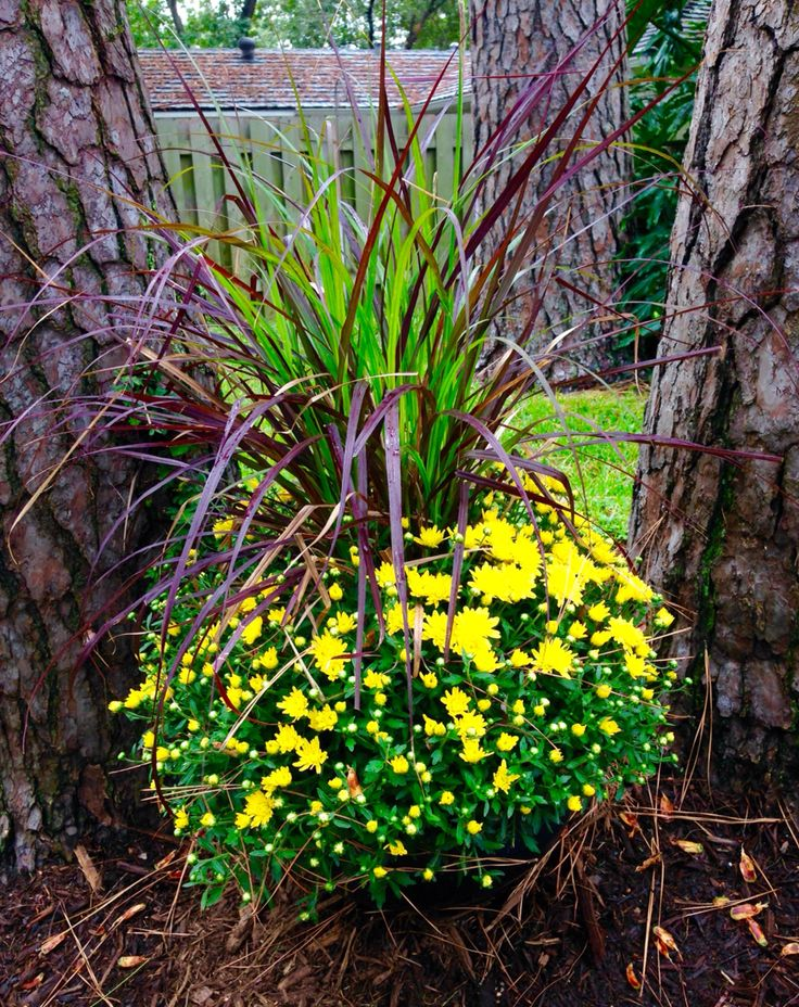 15 Best Lowe 39 S Garden Center Displays Images On Pinterest