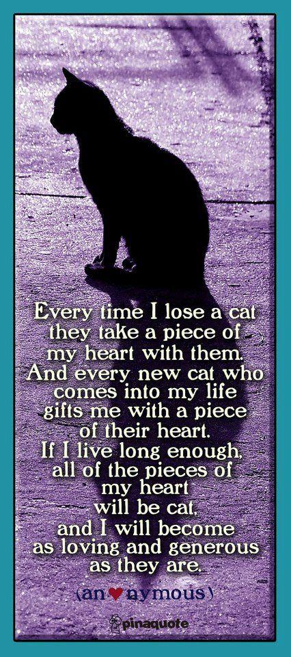 Cat poems on pinterest rainbow bridge poem cats and warrior cats