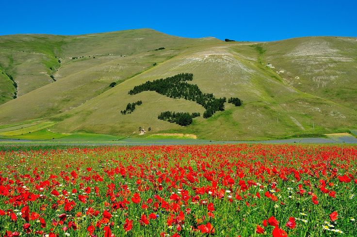 Italy and Poppies... by Renato Pantini on 500px