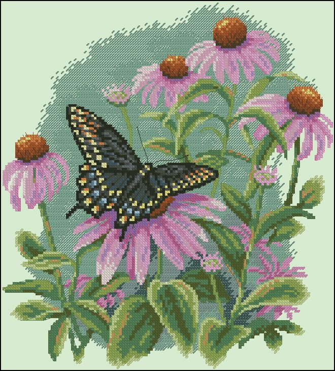 Butterfly and deisies