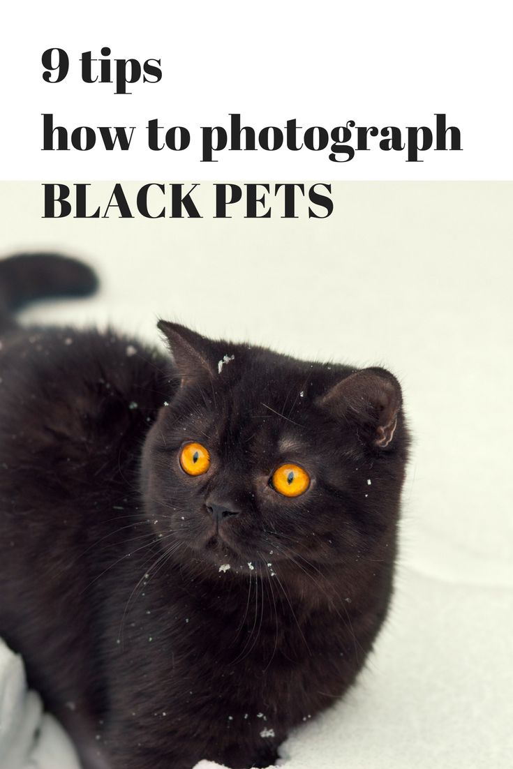 Find out how to stop making black blobs out of your black pets on a photo. Make them stand out with these great tips!