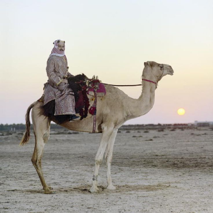 Sheikh Hamad bin Isa Al Khalifa riding a camel in Bahrain on 5th Jan 1975, who succeeded his father to become Emir of Bahrain in 1999 and upon creation of a Kingdom, King of Bahrain in 2002
