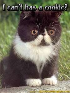 Why not?Mel Gibson, Funny Cat Photos, Funny Face, Persian Kittens, Baby Animal, Exotic Shorthair, Scottish Folding Kittens, Kitty, Cute Kittens