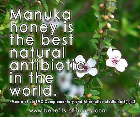 Image result for manuka honey the best antibiotic