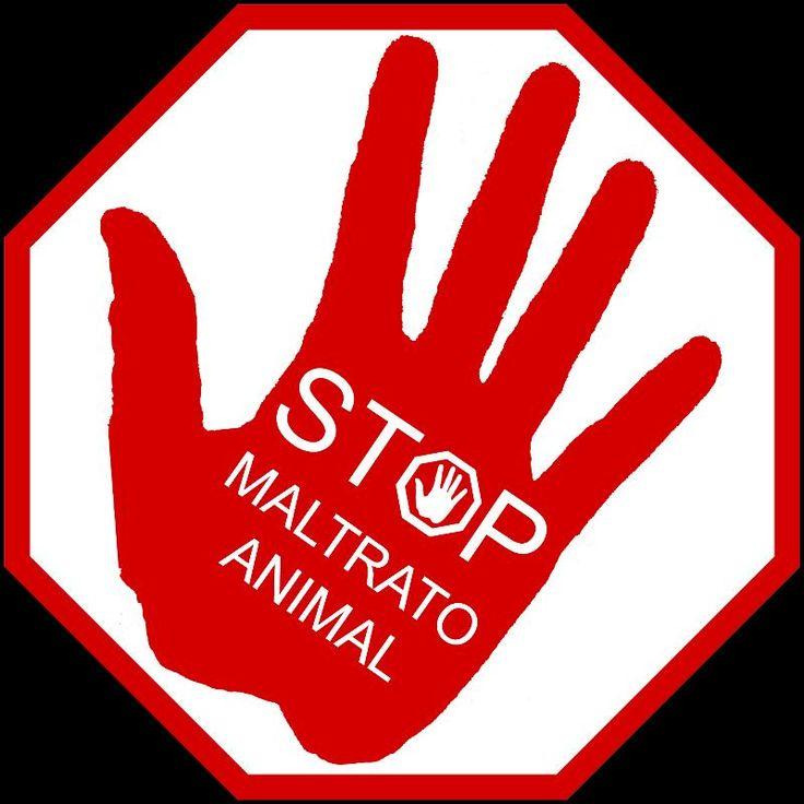 #changeorg mi nuevo post en mi #blog Victor Madera   http://victormadera.blogspot.es/1465212923/victor-madera-change-org-como-herramienta-animalista-/  ♥️ si también dices NO al maltrato animal