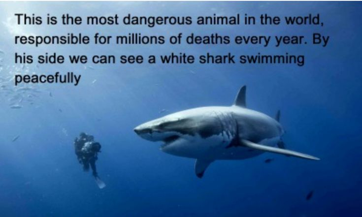 The common fear of sharks is largely unfounded.  As Sea Shepherd points out - Every year humans slaughter over 100 million sharks. No more than 12 people a year are killed by sharks worldwide. In fact [it] is more dangerous to play golf than to swim in the ocean with sharks. More golfers are struck by lightning and killed each year than the total number of shark fatalities. Many more humans are struck and killed by boats every year than are attacked by sharks.