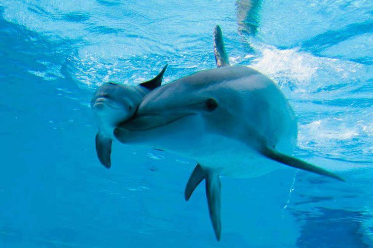 Mother dolphin and young